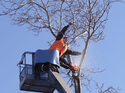 Вырубка деревьев в Истре