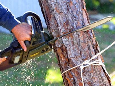 Вырубка деревьев в Красногорске