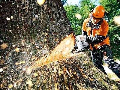 Вырубка деревьев в Одинцово